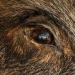Vorsicht Wildschwein! Was tun, wenn ein Wildschwein vor dir steht?